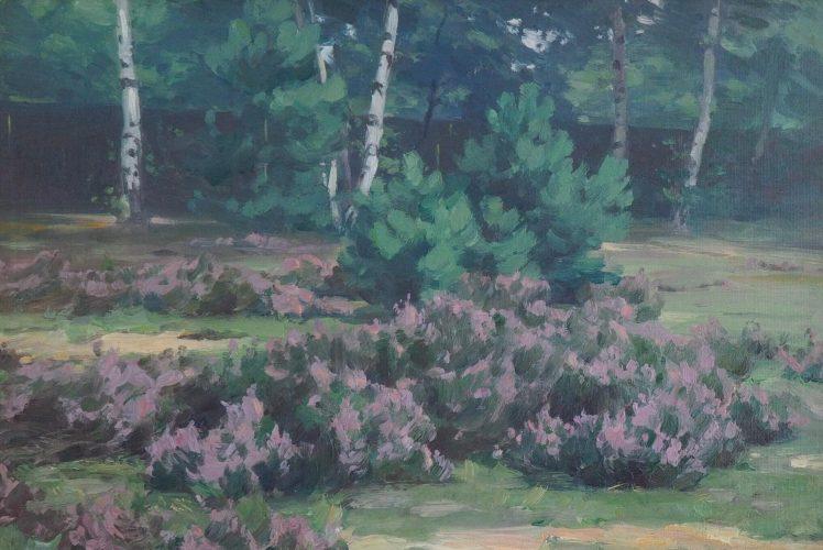 Johannes Rudolphi - blühendes Heidekraut